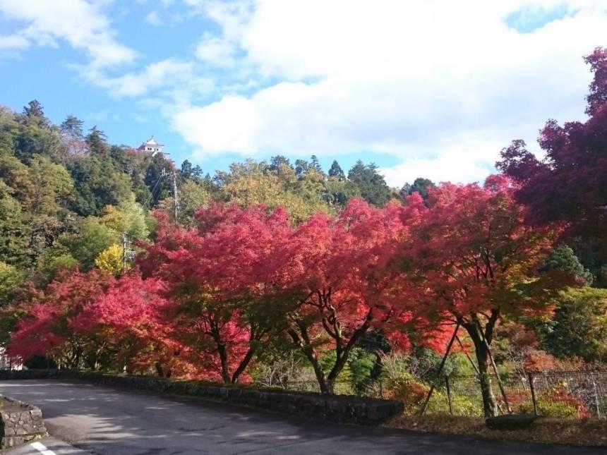 昨年の紅葉の様子